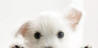 very-cute-dog-background-1600x1200-1007067.jpg