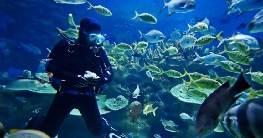 is-scuba-diving-a-sport-660x330.jpg