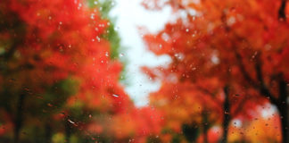autumn-rain.jpg