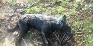 dead_dog1.jpg