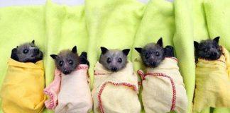 baby-bats-20.jpg
