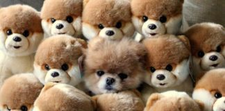 hiding-ninja-funny-dogs-231_605.jpg