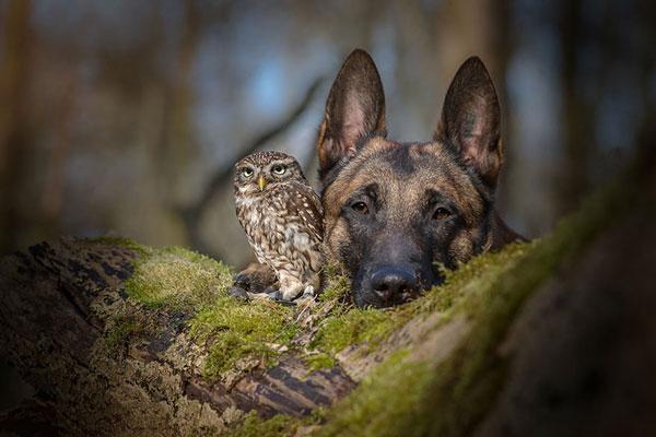 dogowl1.jpg