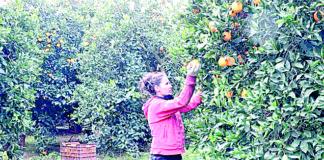 portokalia.jpg