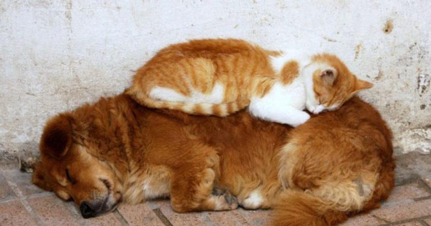 sleepcat12.jpg