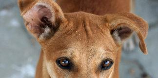 straydoggy.jpg