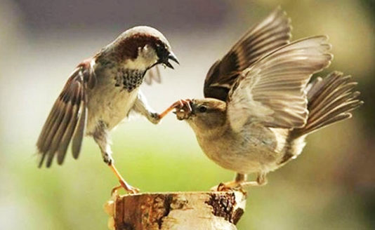 funnybirds3.jpg