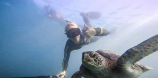 entyposiakes_selfies_sto_vytho_ton_okeanon_me_thalassia_zoa_video.jpg