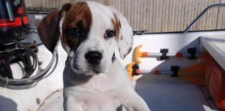 otan_ta_skylakia_kanoyn_puppy_eyes.jpg