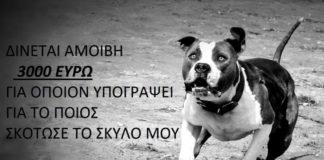 sta_3.000_eyro_i_amoivi_gia_ton_dilitiriasmo_toy_pitbull.jpg