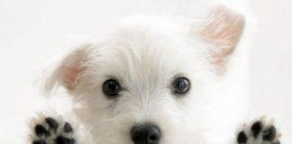 999956_dog-770x514.jpg