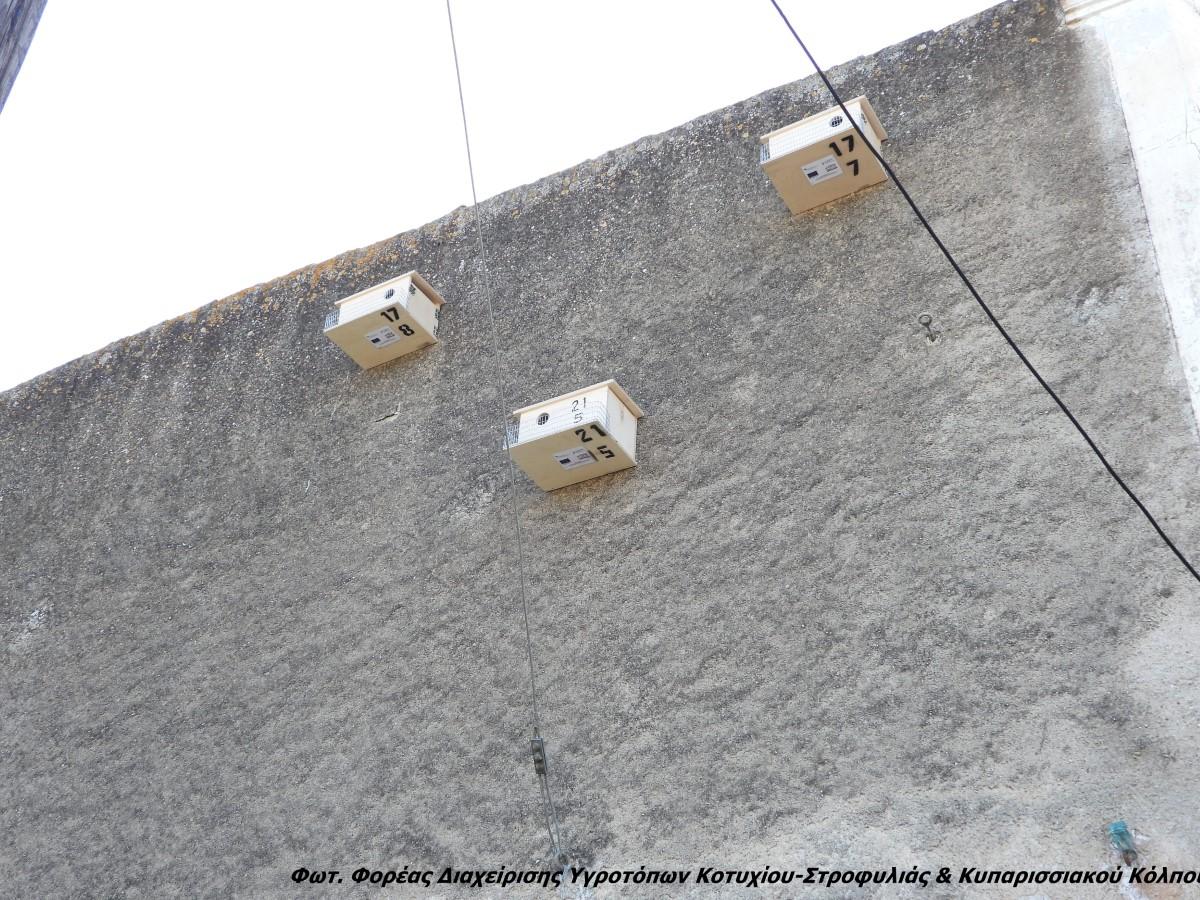Φορέας Διαχείρισης Υγροτόπων Κοτυχίου Στροφυλιάς & Κυπαρισσιακού Κόλπου: Ξεκίνησε η δράση για τα Κιρκινέζια
