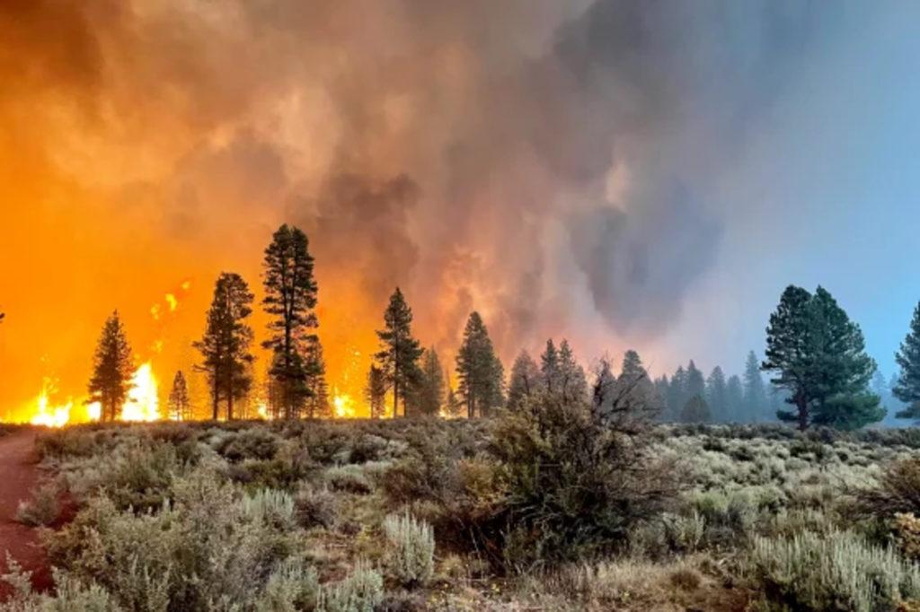 φωτιά καίει δάσος στις ΗΠΑ