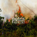 πυρκαγιά σε δασική έκταση