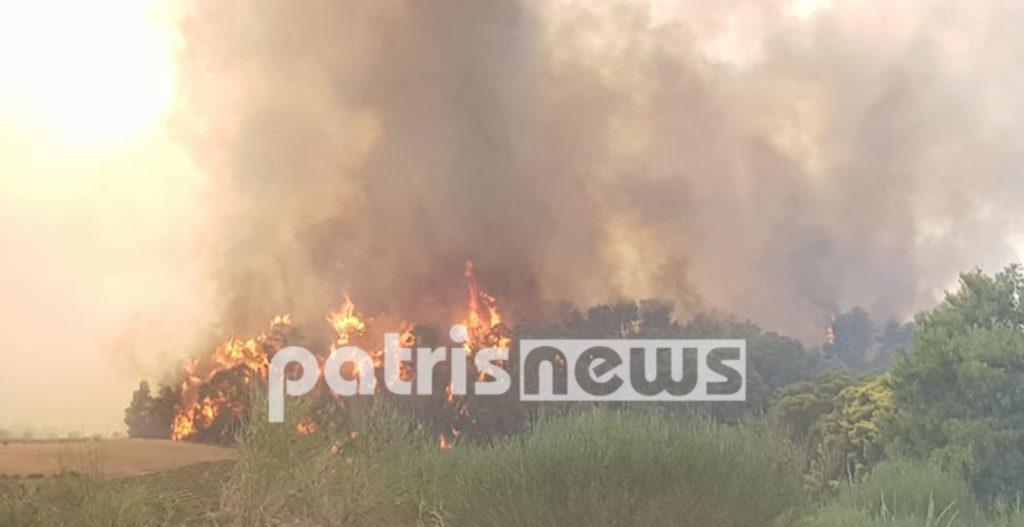 πυρκαγιά καίει δασική έκταση